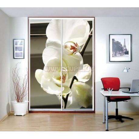 Фотопечать белой орхидеи на шкафу купе